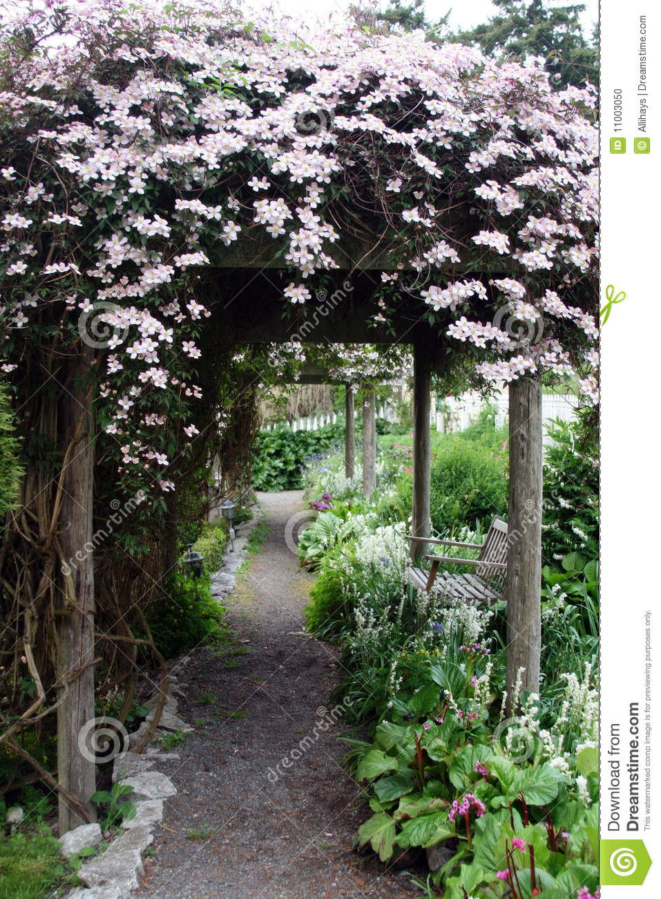 Clematis Covered Path Stock Photo Image Of Flower Garden