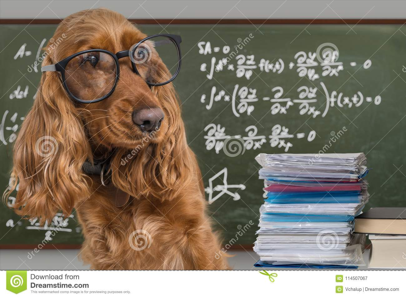 Clever Funny Dog Wearing Eyeglasses  Math Equations On Blackboard In