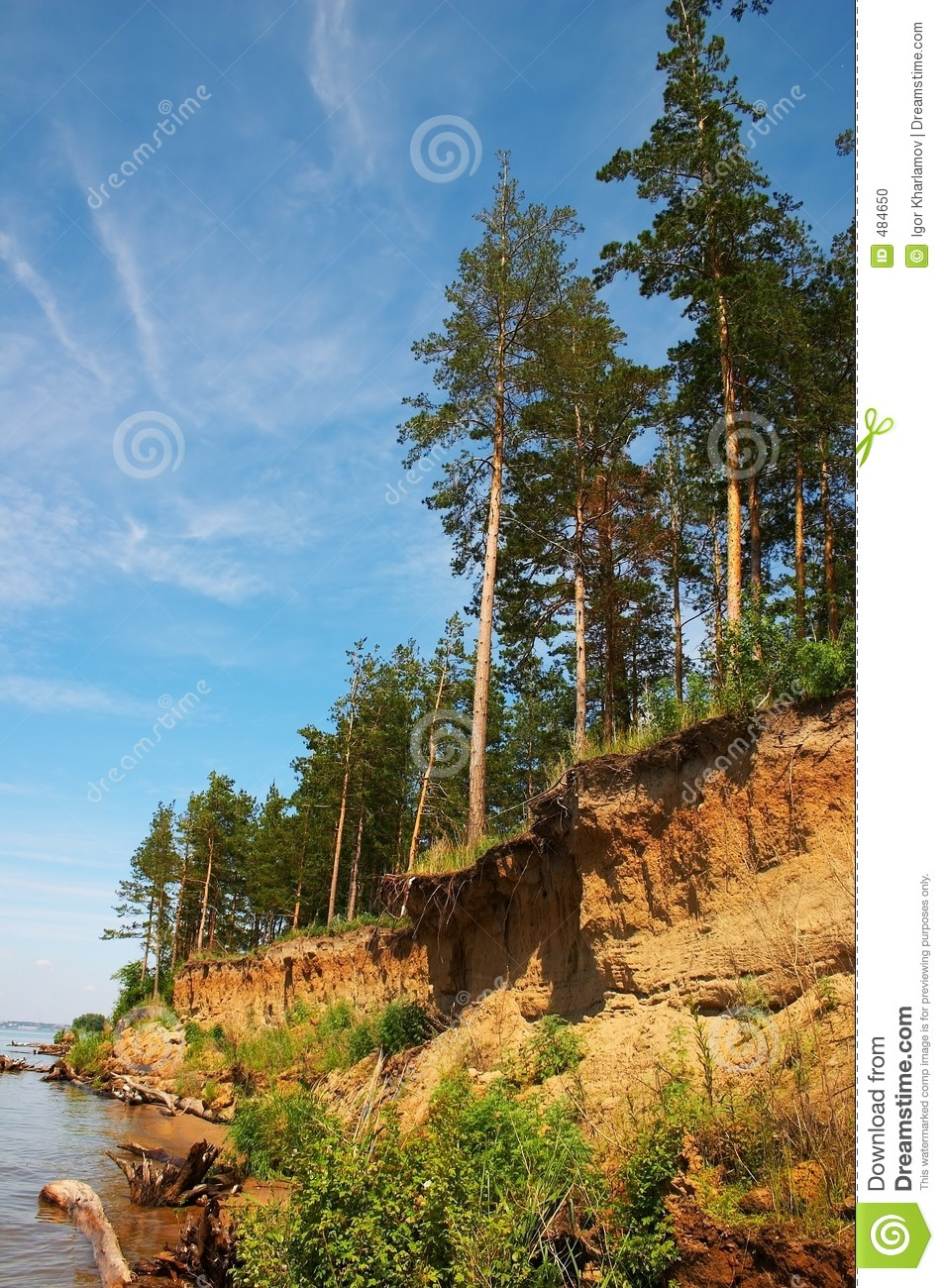 Cliff and firs
