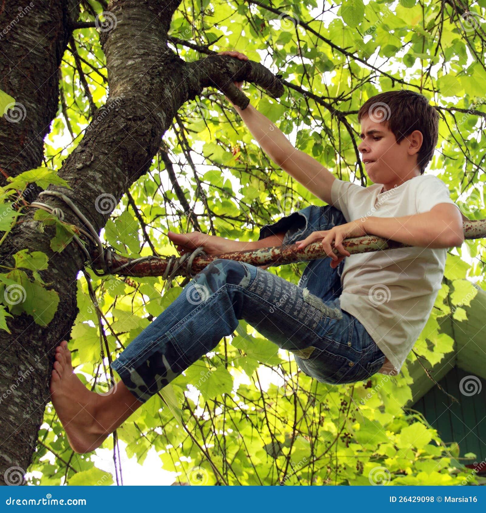 Climb A Tree Royalty Free Stock Photos - Image: 26429098