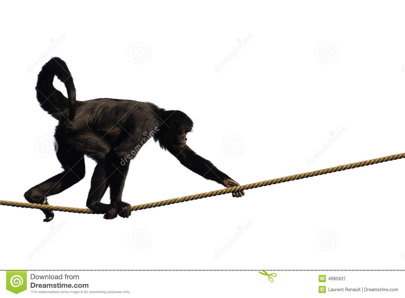 Climbing Monkey Royalty Free Stock Photography - Image: 4685937