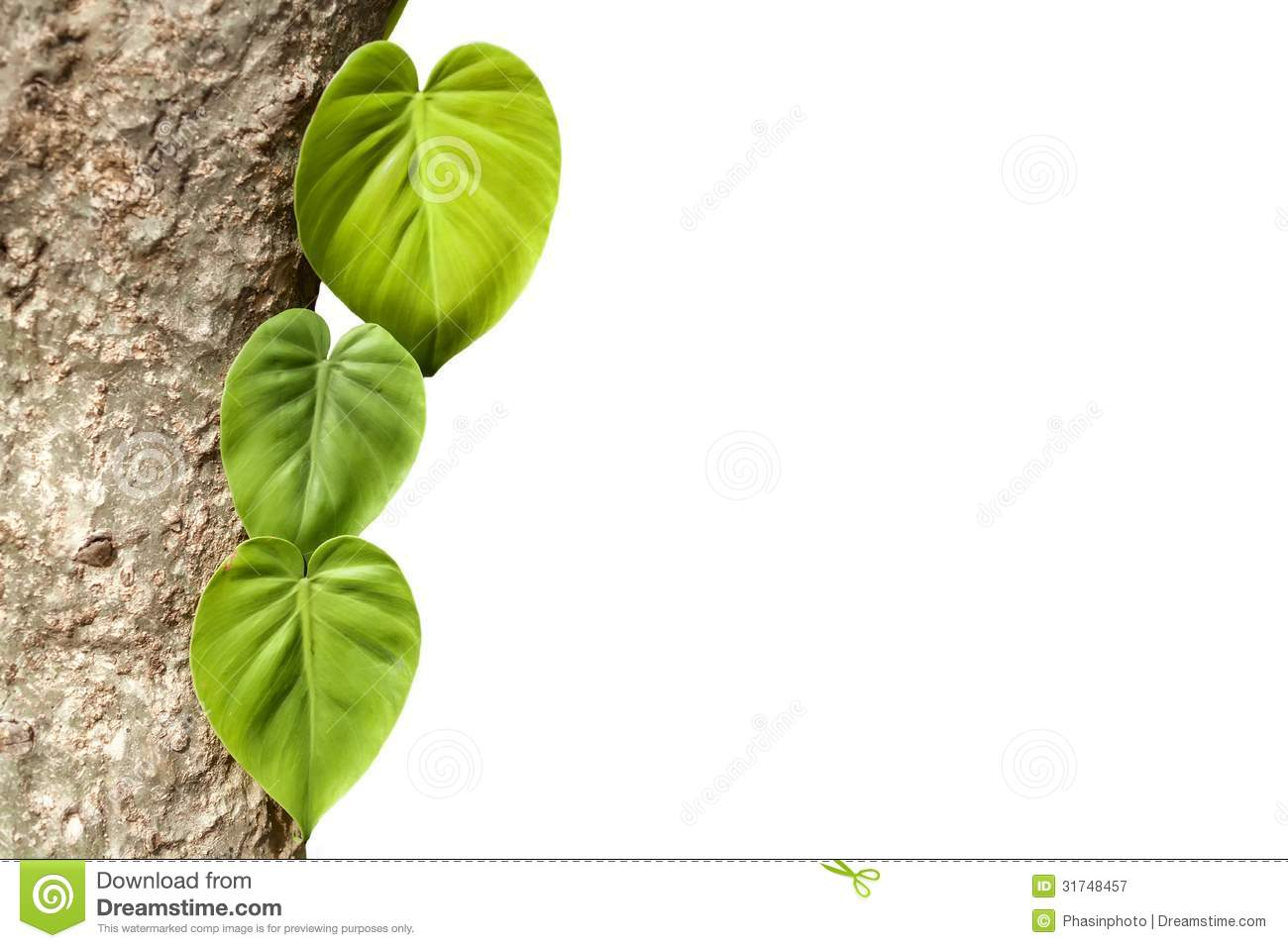climbing plants on trunk with white background royalty free stock photography - Climbing Plants