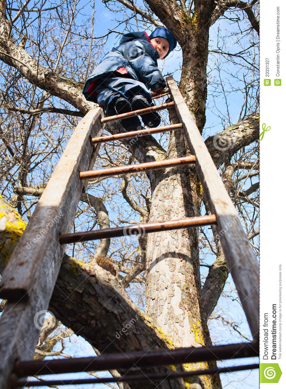 Climbing Up Tree Royalty Free Stock Photography Image