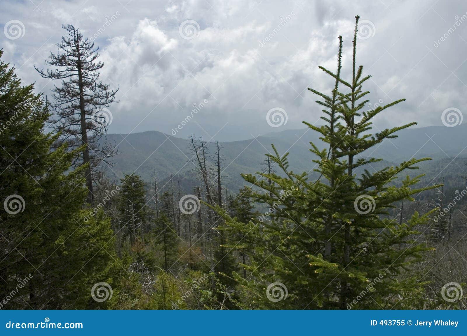 Clingmans придают куполообразную форму: большое smokey гор
