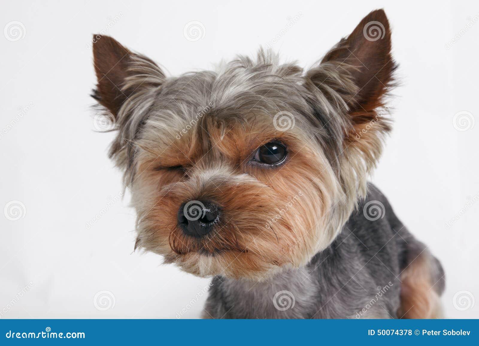 Animal Lover sur Pinterest Images Drôles D'animaux, Loutres et Chatons