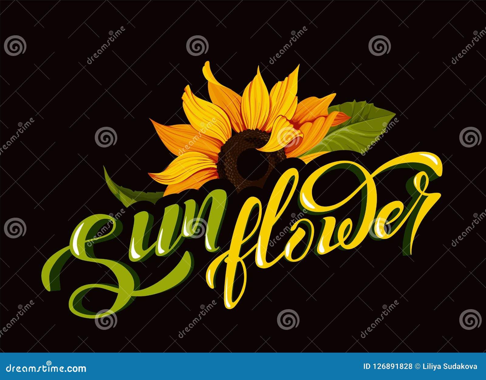 Clip art del vector del girasol con el ejemplo de la botánica del otoño del amarillo del nombre de la flor de la caligrafía de la