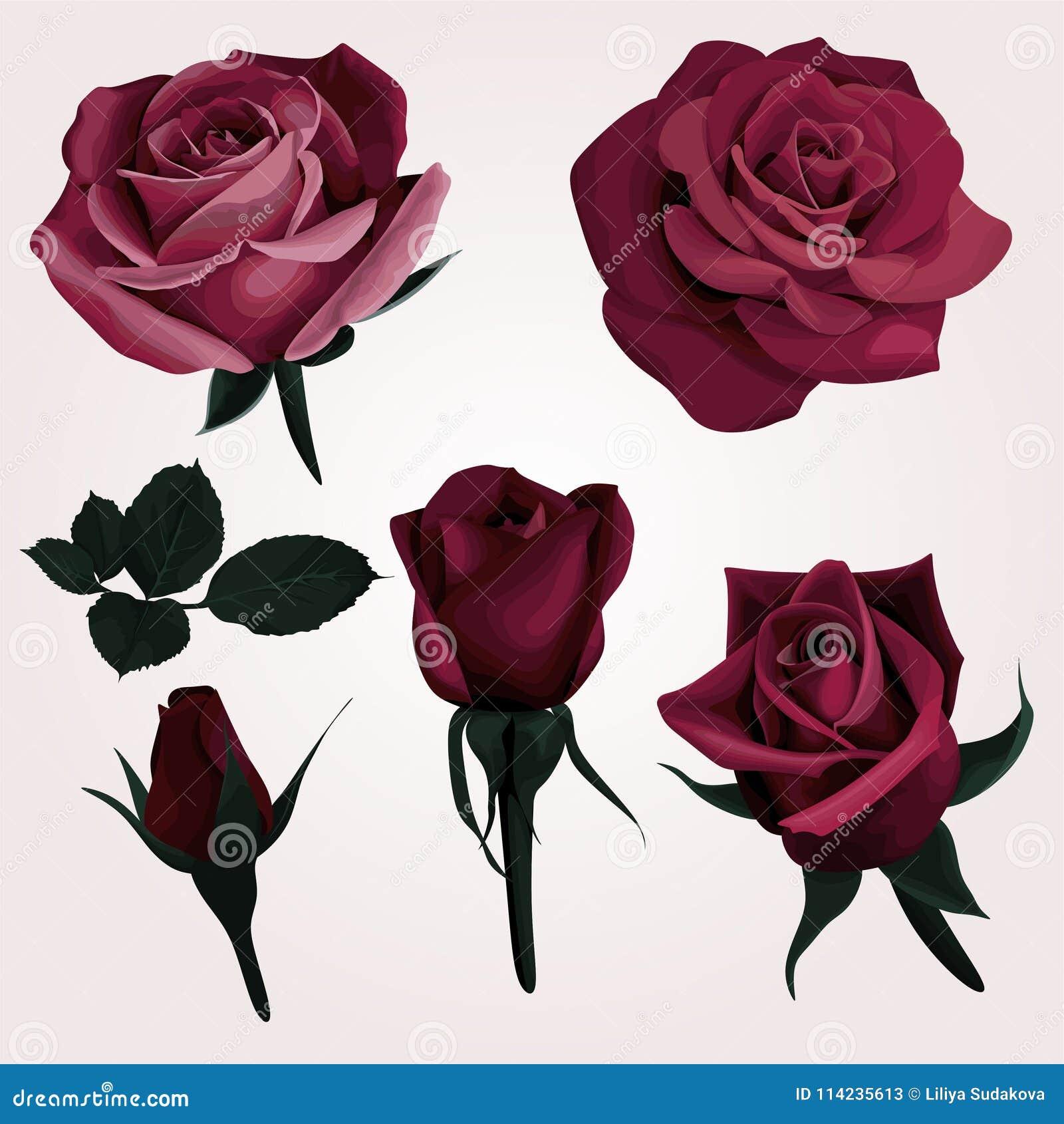 Perfecto Rosa Realista Para Colorear Imagen - Ideas Para Colorear ...