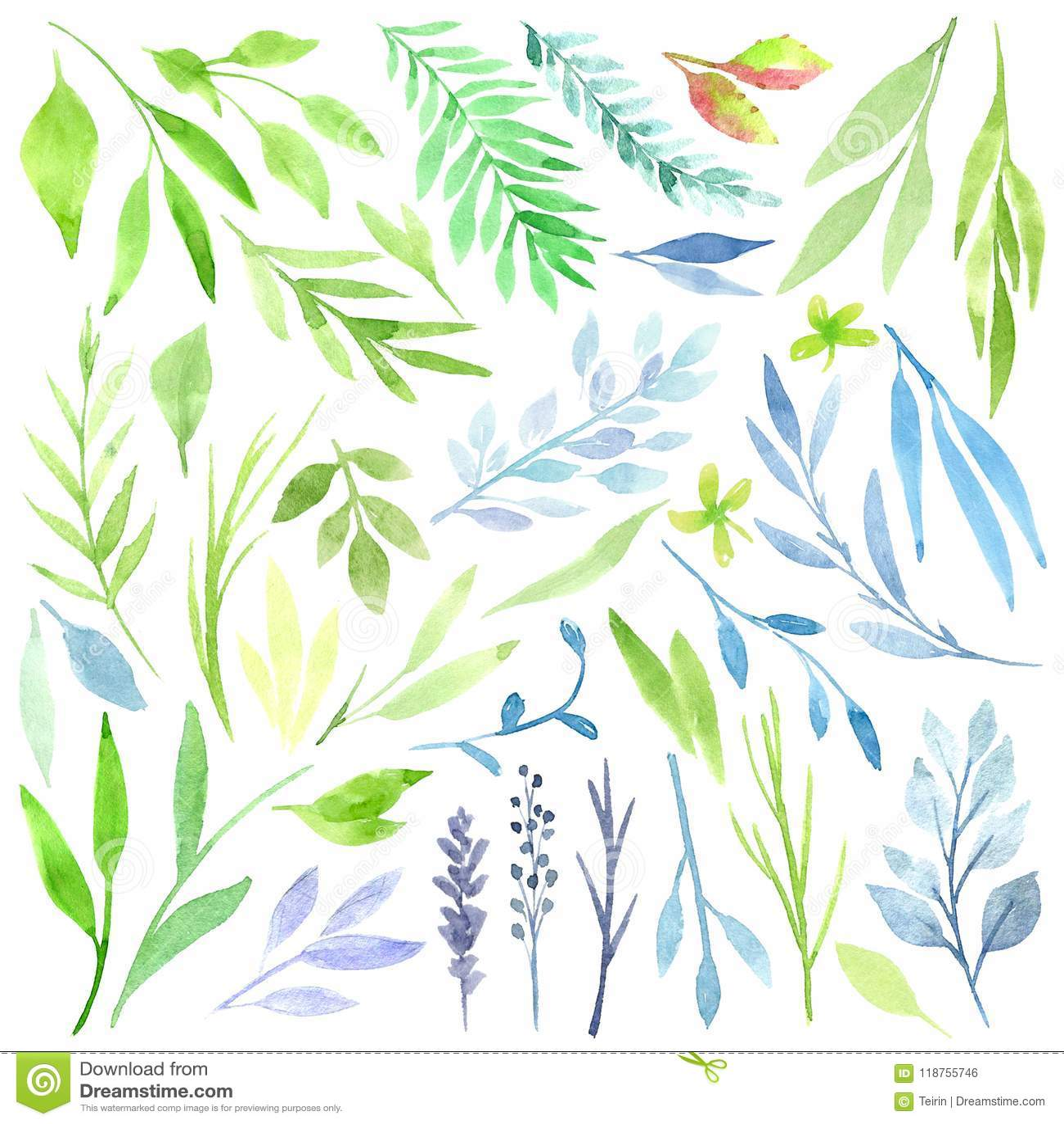 Clipart botanique Ensemble de feuilles, d herbes et de branches vertes Éléments de conception graphique Perfectionnez pour épouse