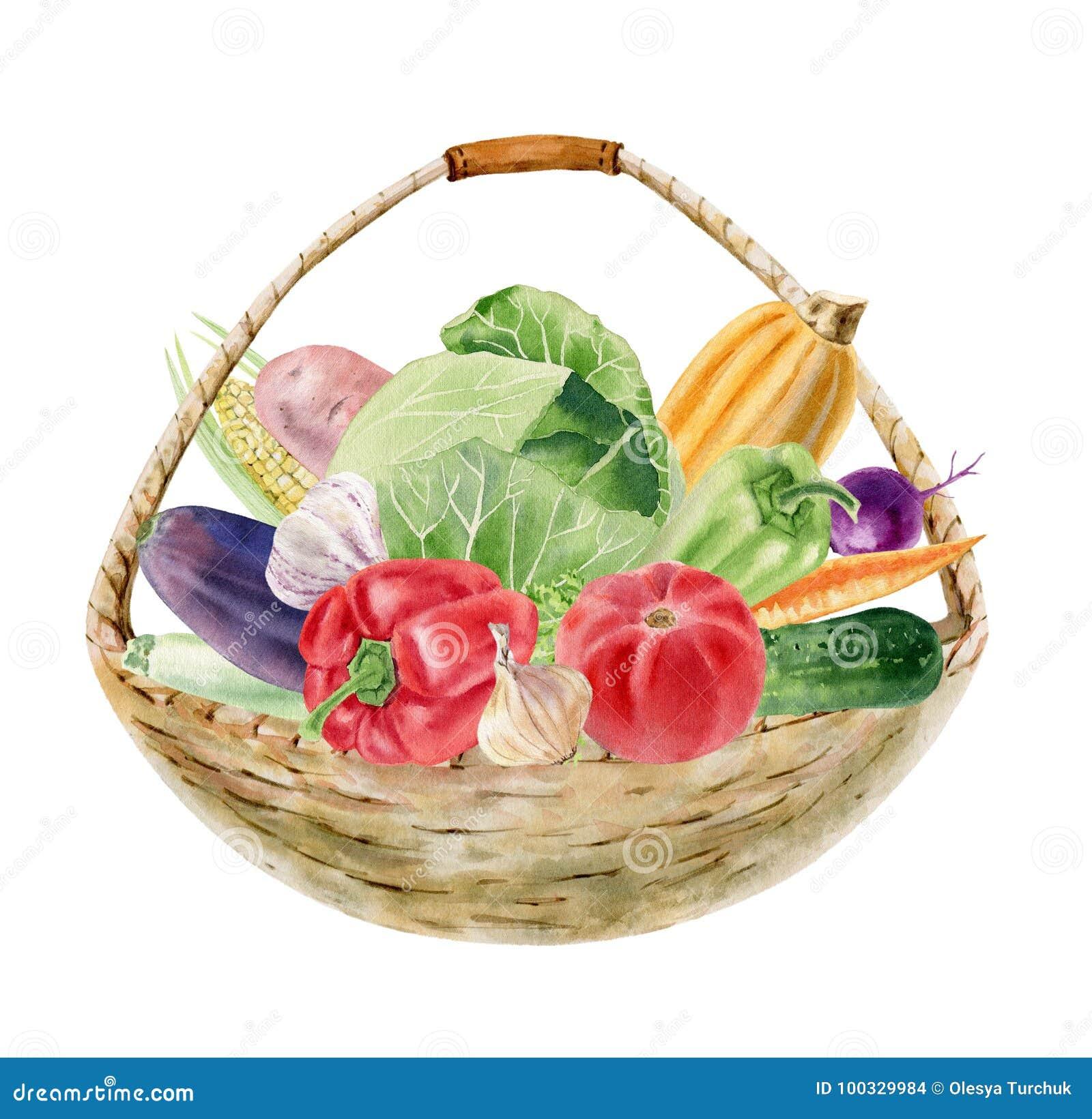 Clipart pintado a mano de la acuarela con las verduras frescas en cesta