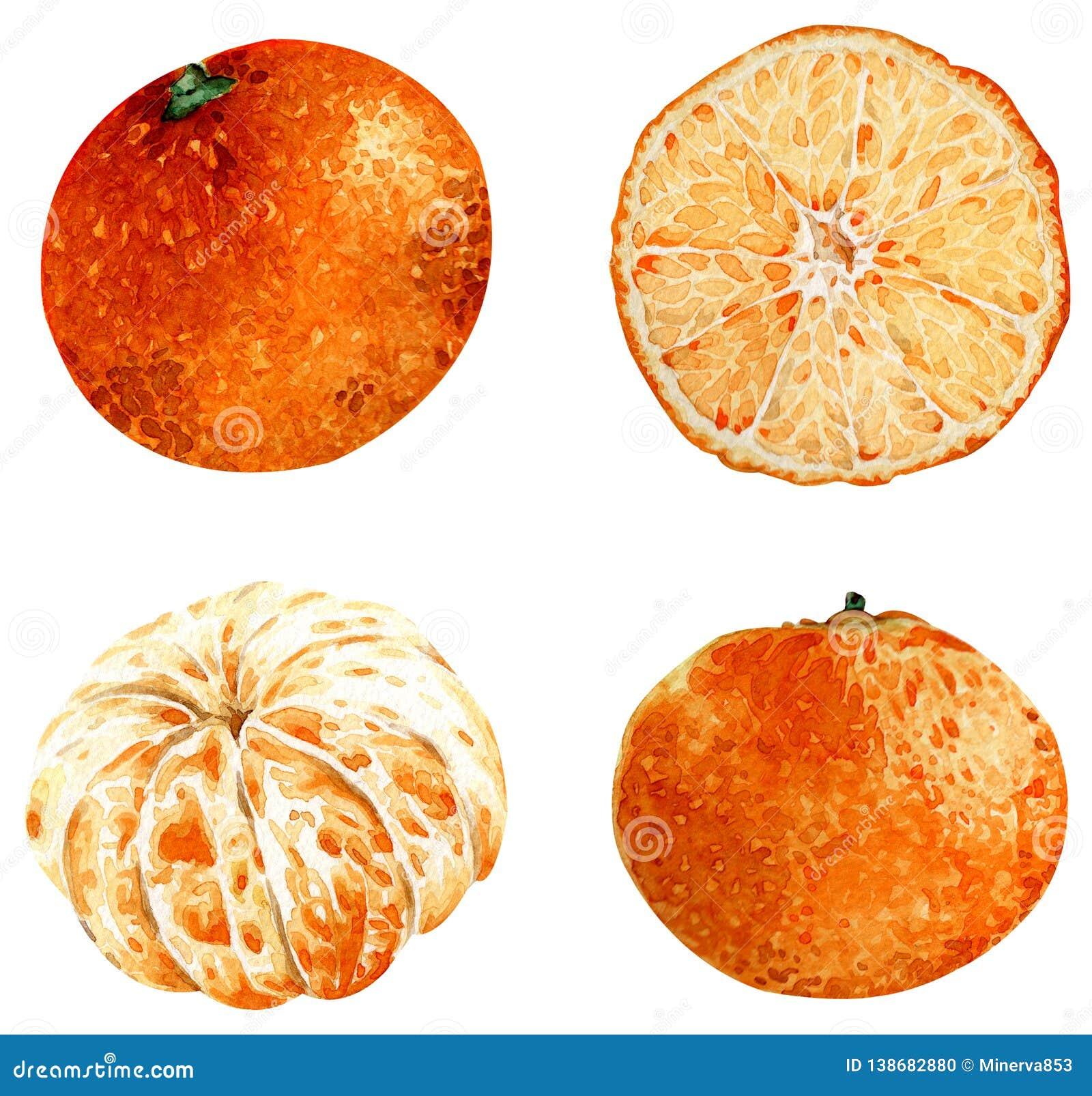 Clipart Tangerine изолированное на белой предпосылке иллюстрация тропическая плодоовощи изображение иллюстрации летания клюва дек