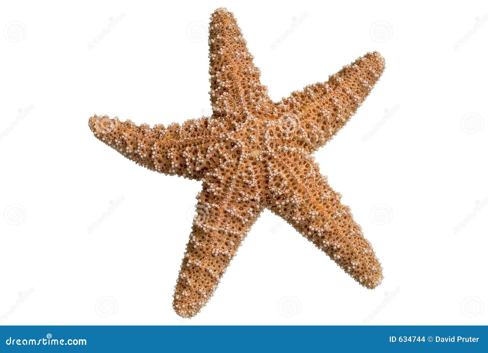 Download Clipped starfish стоковое фото. изображение насчитывающей звезда - 634744