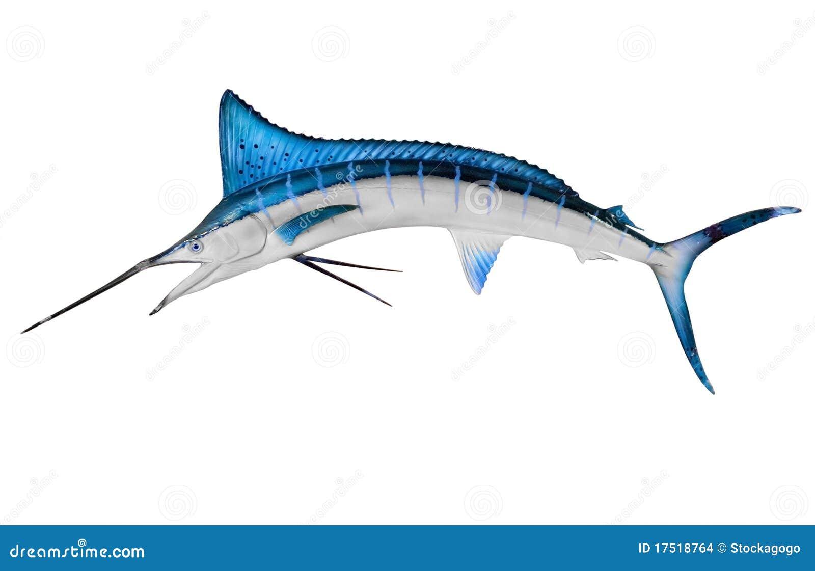 Clippingen isolerade banaswordfish