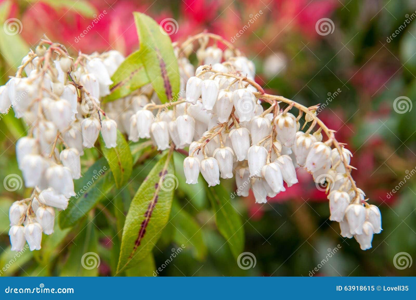 Cloches De Fleur Blanche Image Stock Image Du Bois Saison 63918615