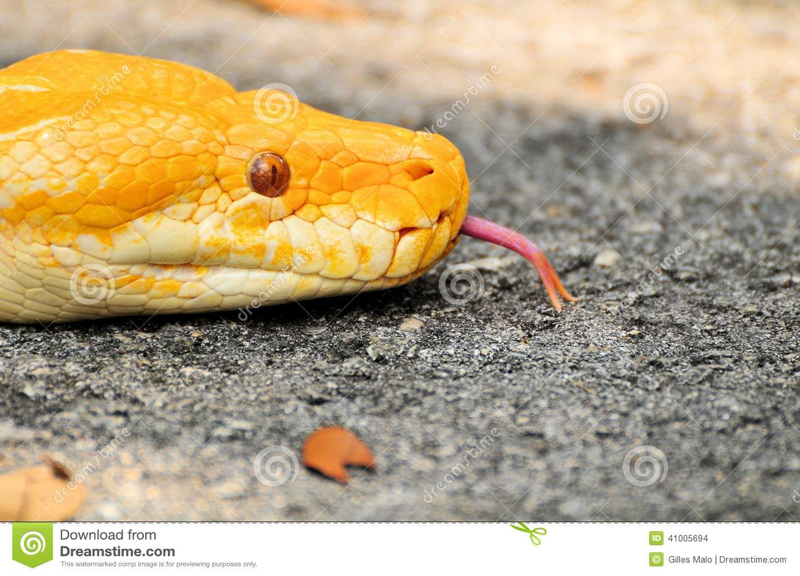 how to close program python