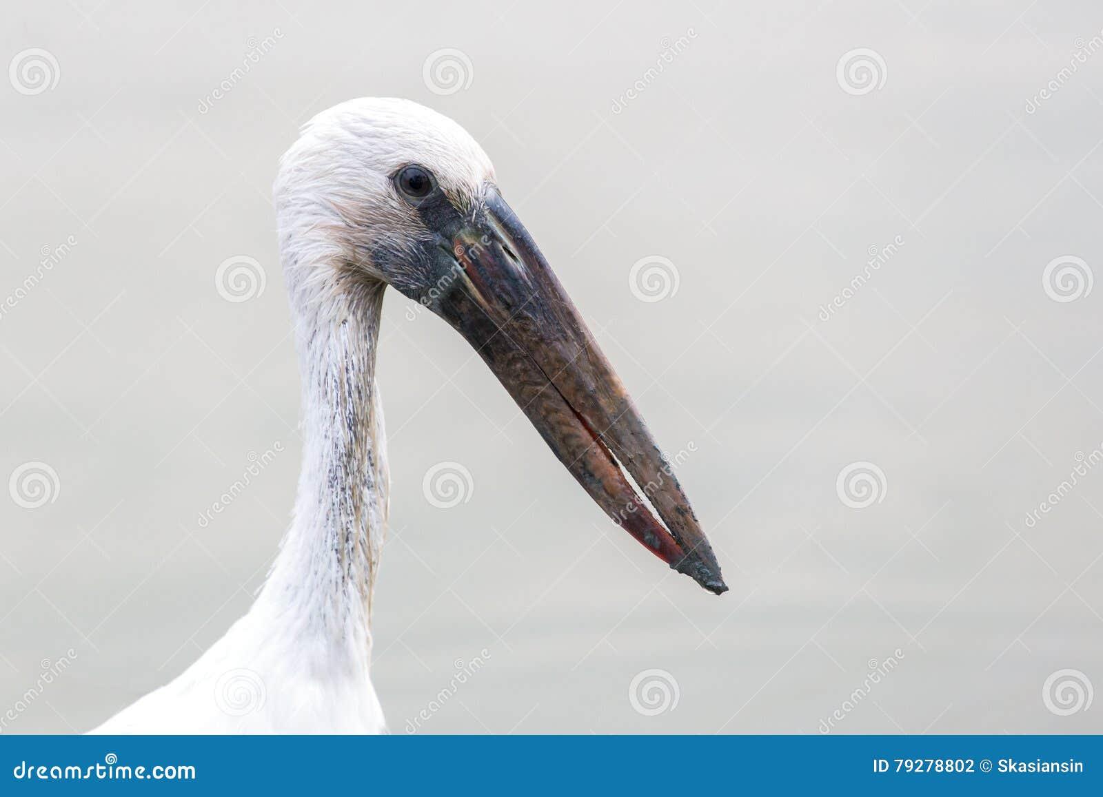 white bird asian singles Search results for white slur  because bird shit is mainly white: bird turd: whites: bird shit is white  asian/white mix: rice king: whites:.
