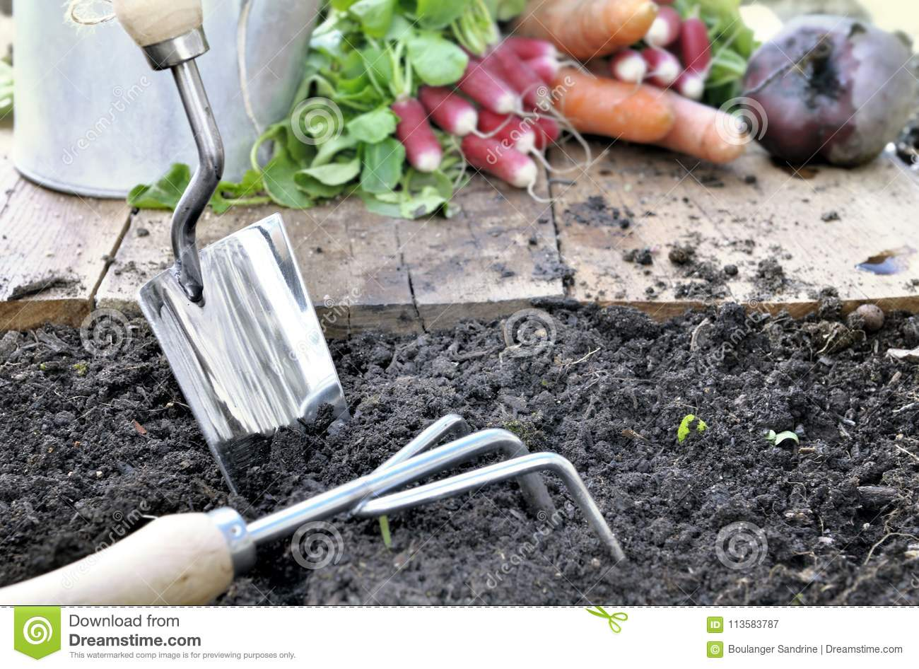 Gardening Tools And Vegetables In Garden Stock Image Image Of