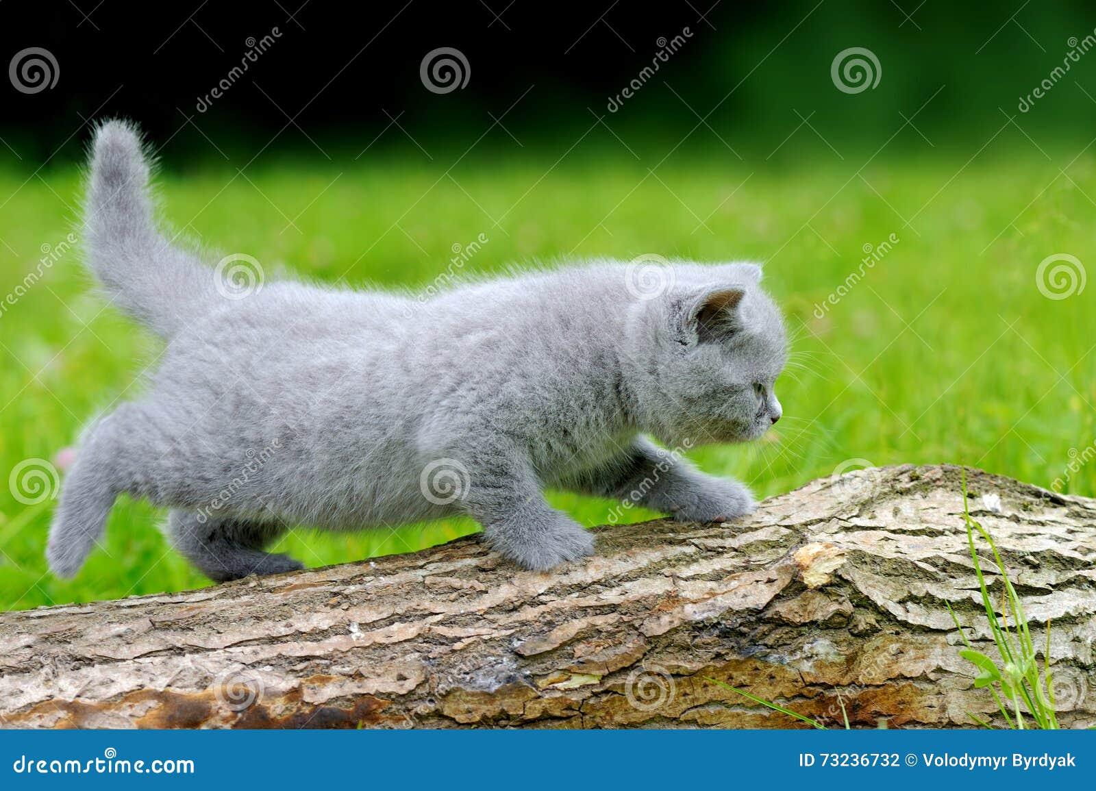 White Cat Fur Turning Yellow