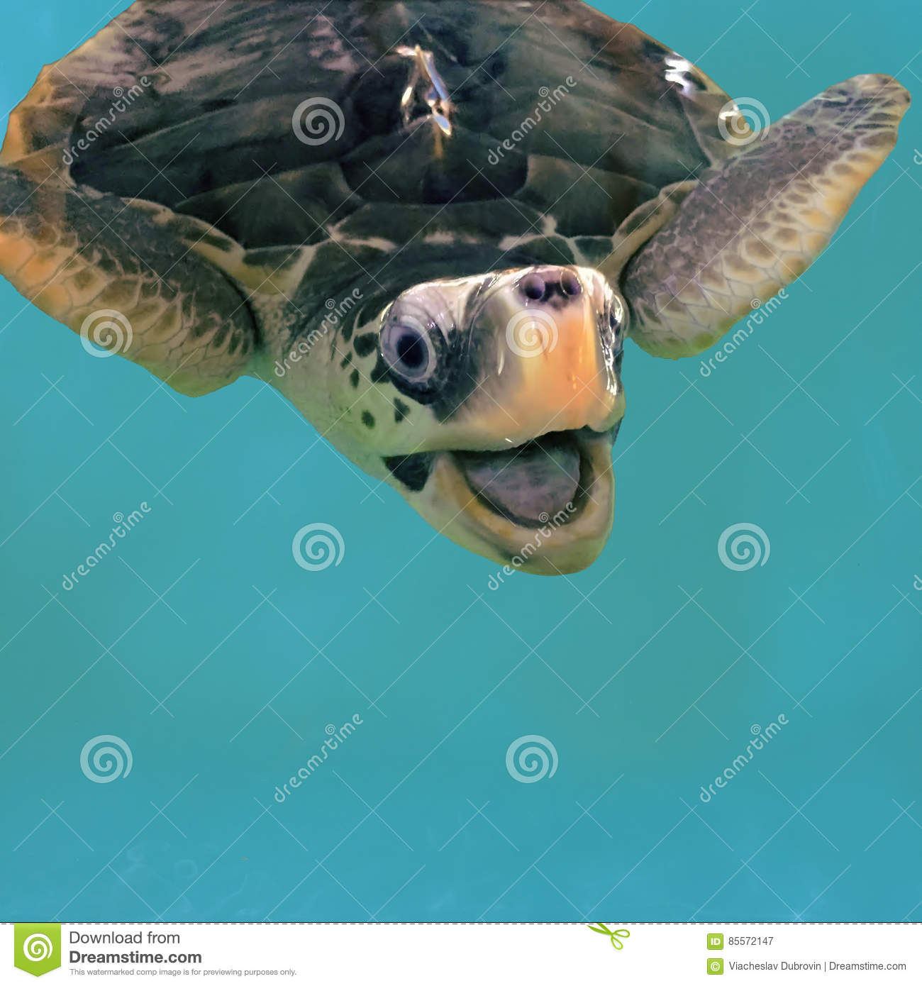 Close Photo Of Smiling Sea Turtle In Water. Olive Green ...