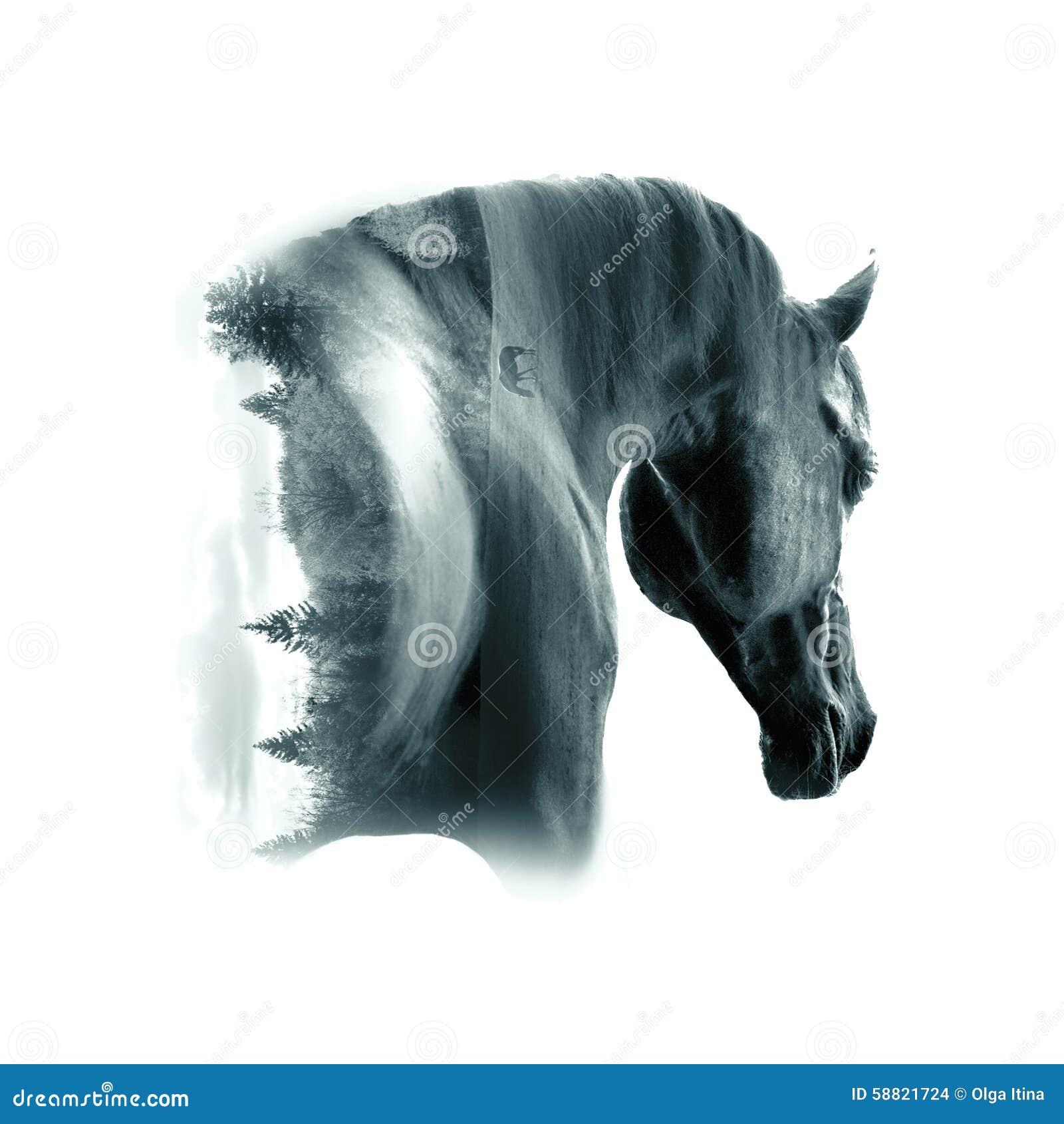 Close up árabe preto do retrato do garanhão contra o backgroun do deserto