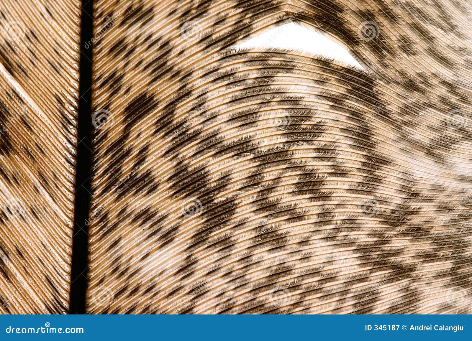 Close-up 6 van de veer