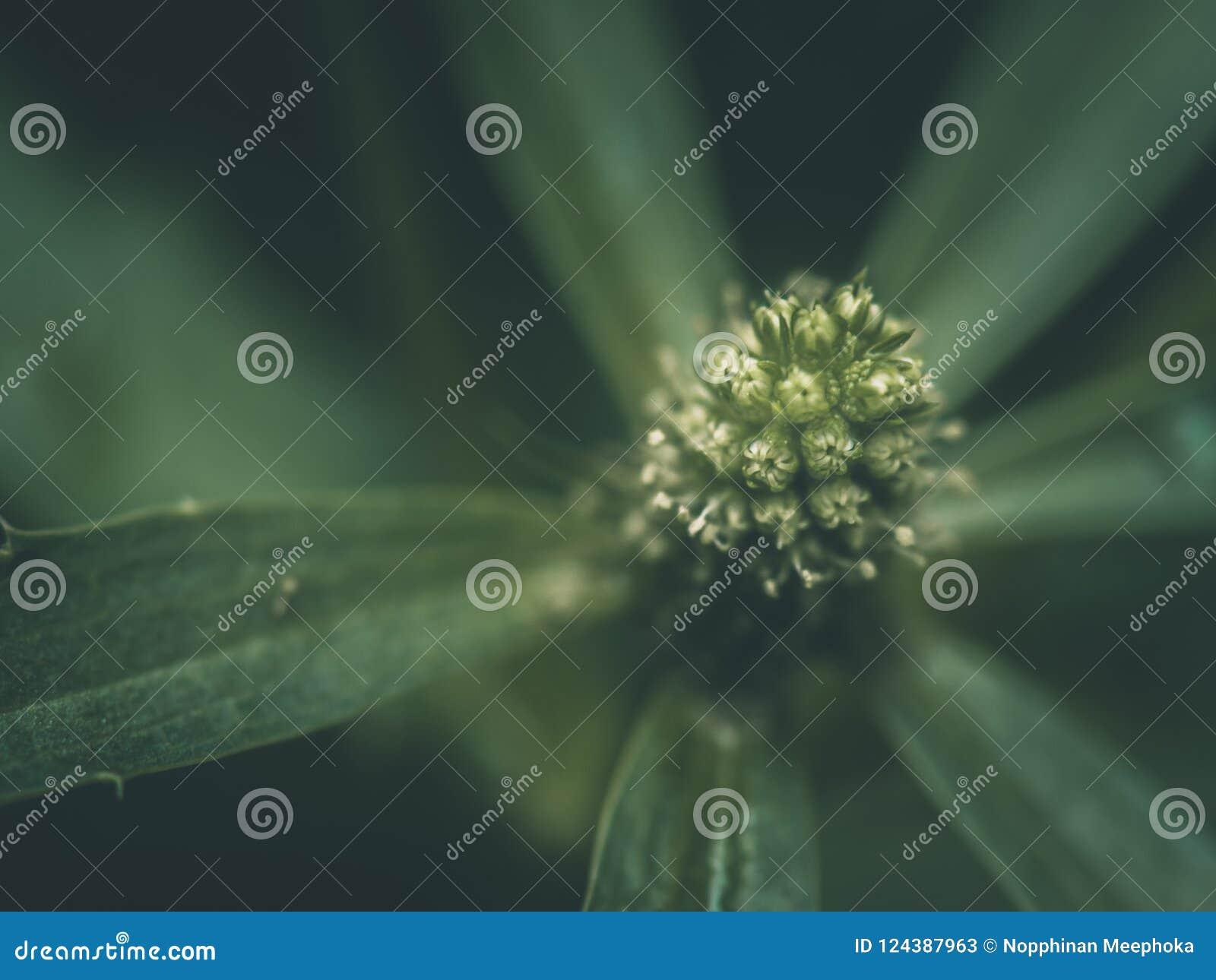 Close-up Abstract macro groen stuifmeel en vage zachte nadruk van groene bladeren