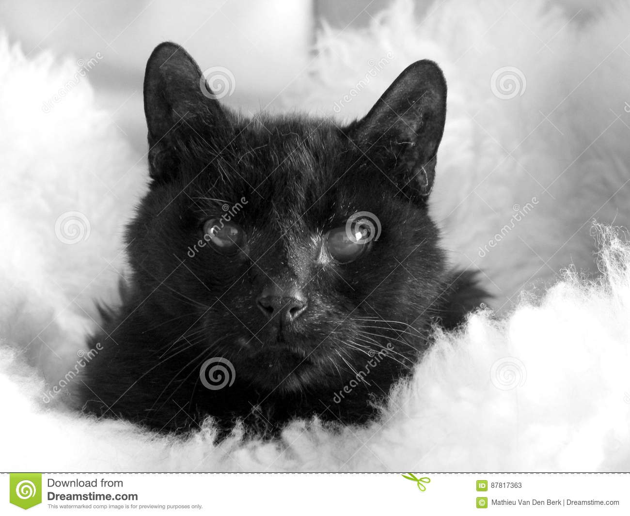 Close Up Of Animal In Domestic Setting Stock Image