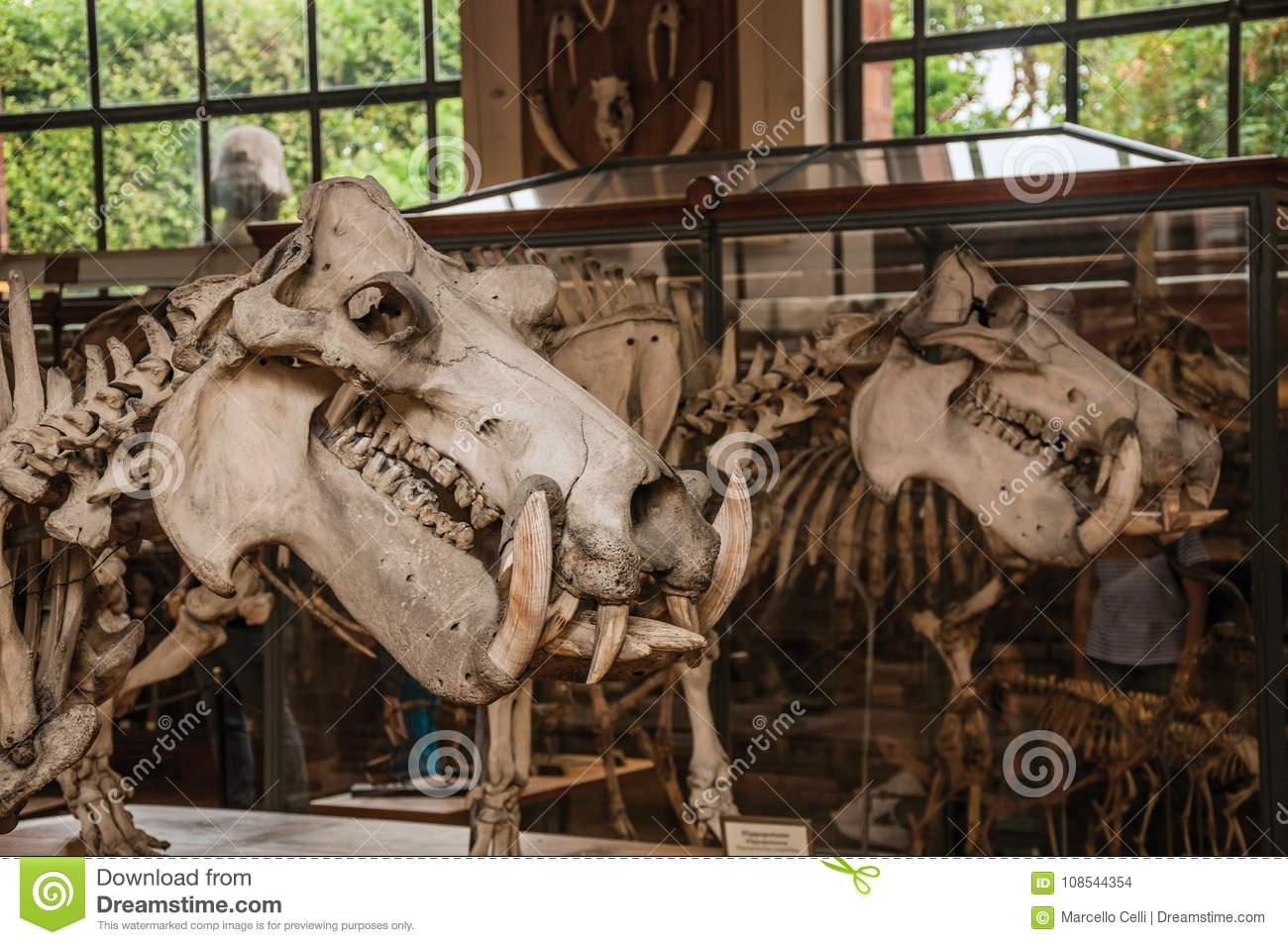 Close Up Of Animal Skull At Hall In Gallery Of Paleontology And