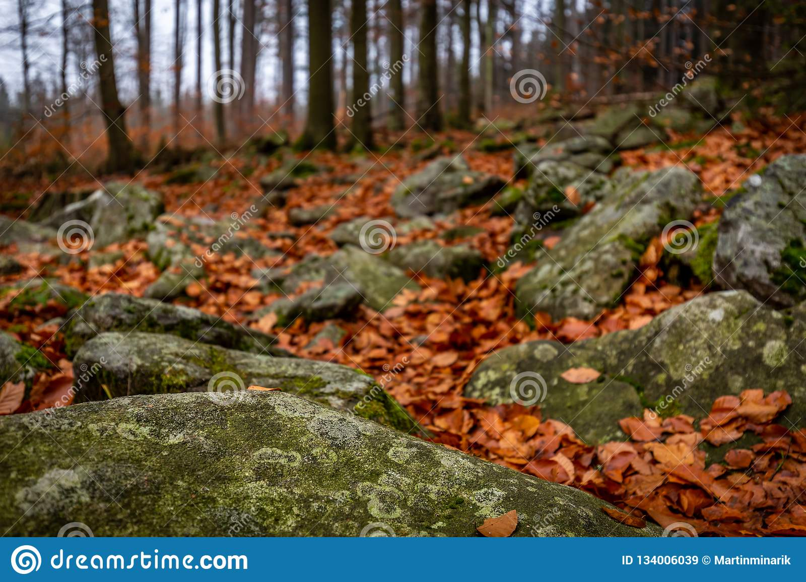Close up on autumn forest with rocks full of moss and colorful fallen leaves on the ground