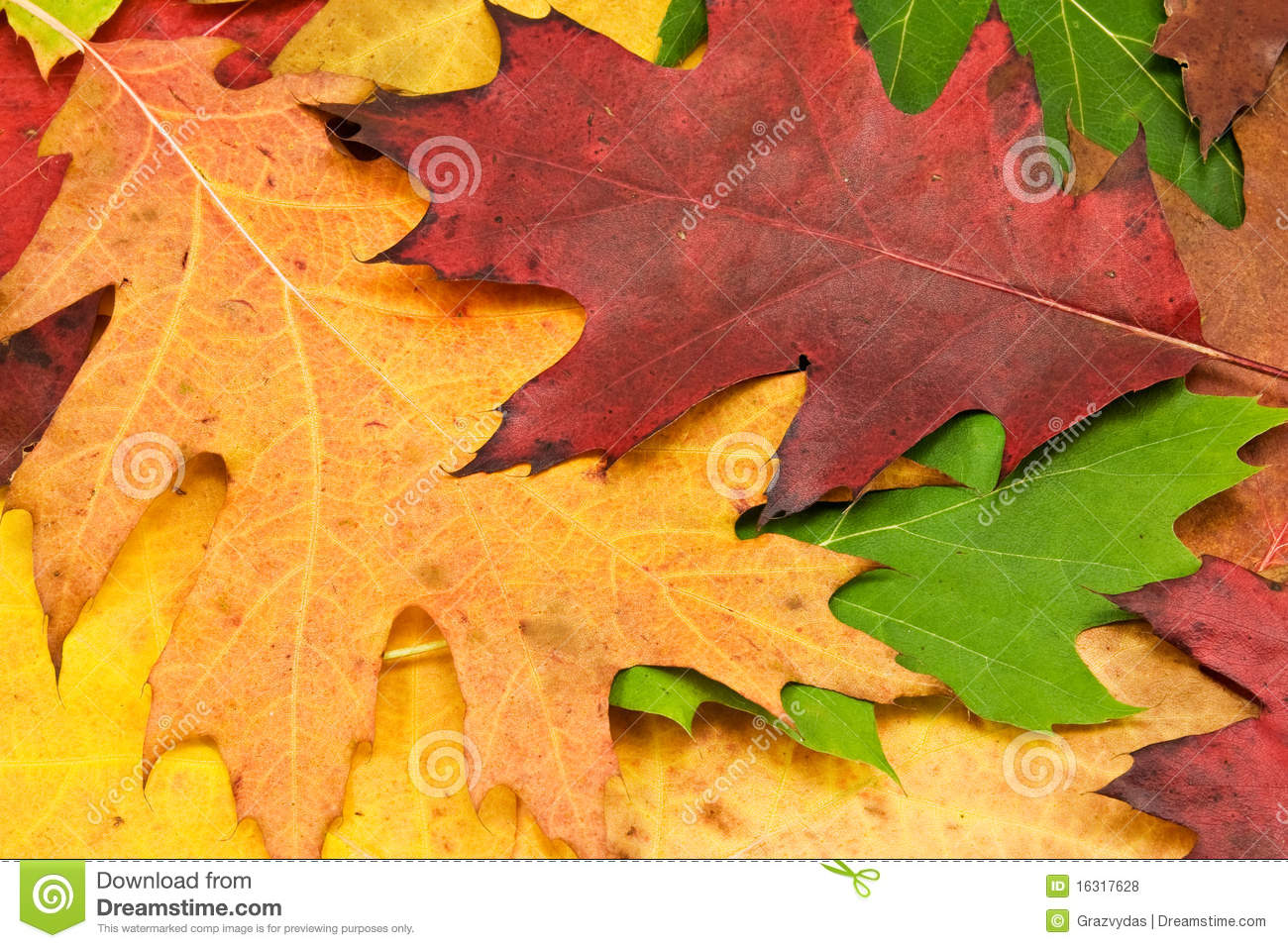 Close Up Of Autumn Leaves Stock Photo Image Of Beautiful 16317628