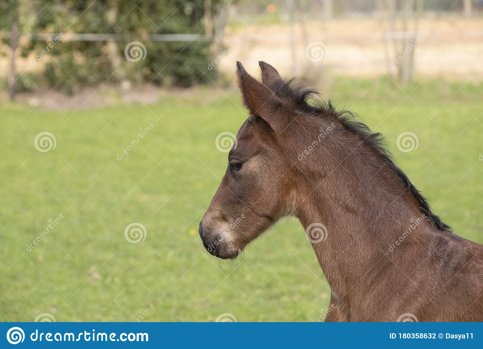 A Close Up Of A Baby Horse On Grass Background Seen From The Side Stock Photo Image Of Born Green 180358632