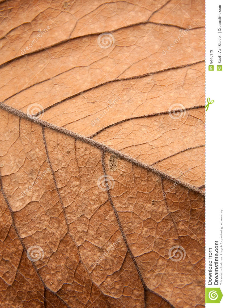 Close up background texture of brown leaf