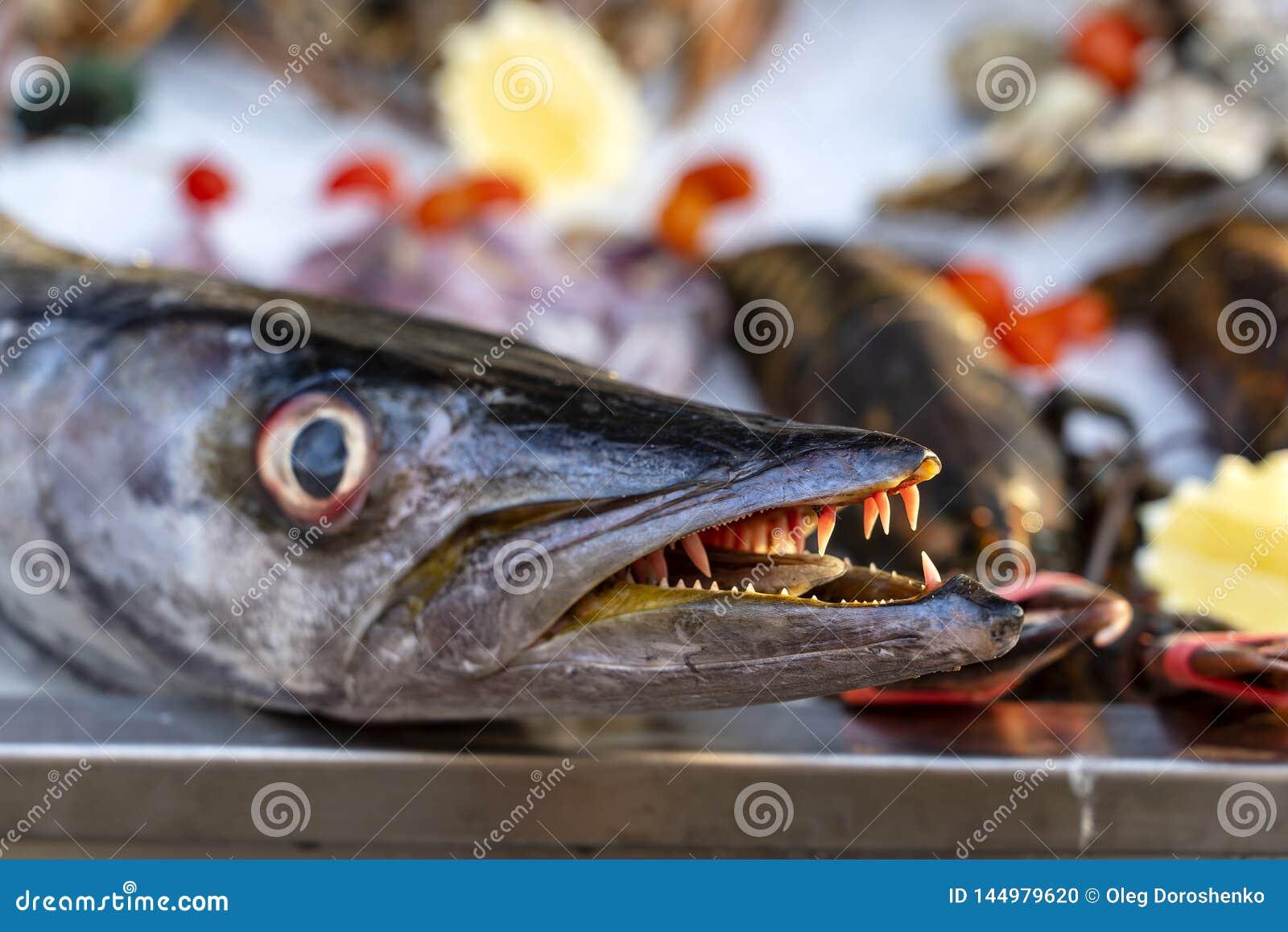 Close Up On Barracuda Teeth. Sea Fresh Fish Barracuda At ...