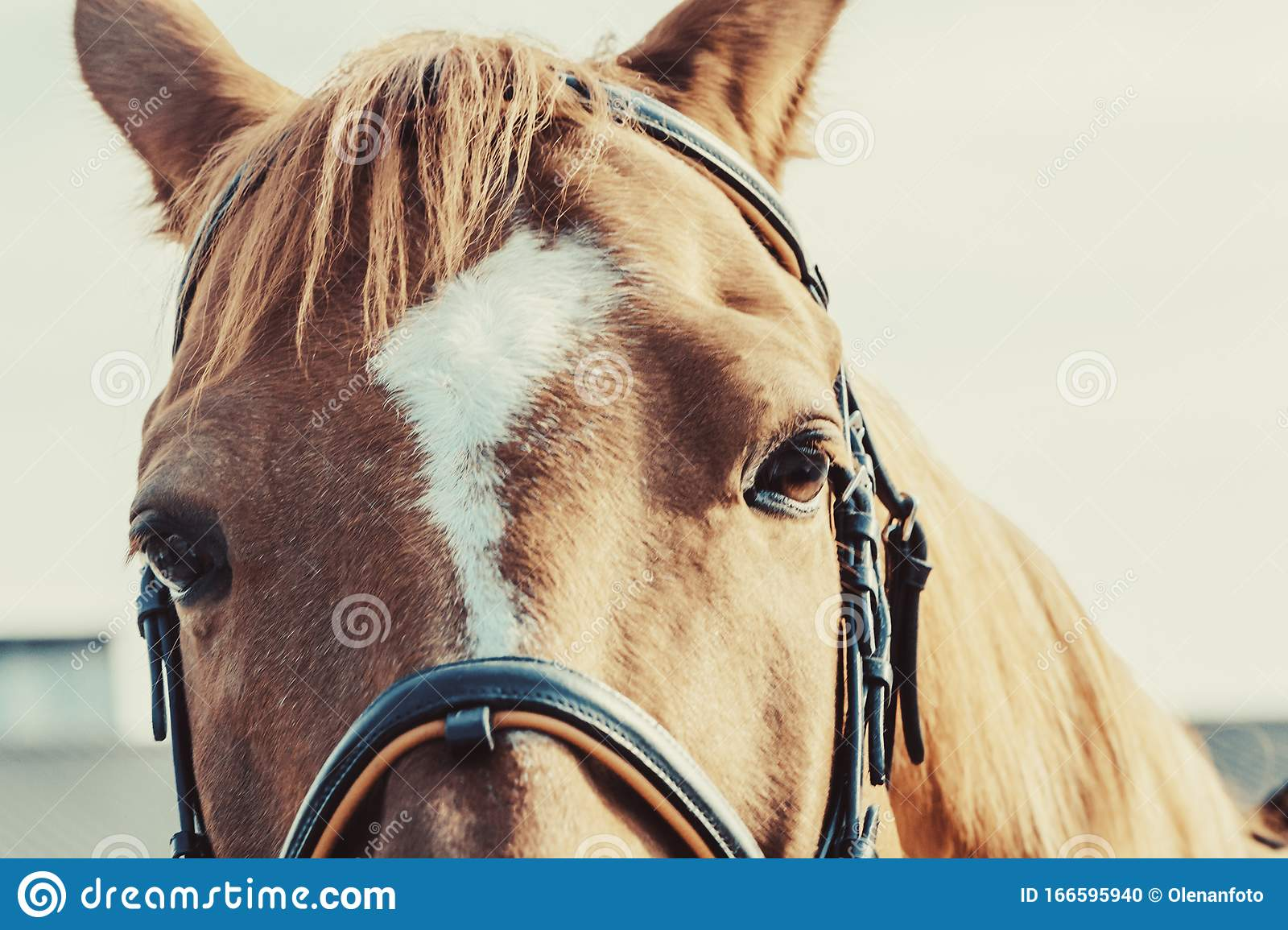 Close Up Beautiful Horse Head On Light Background Stock Photo Image Of Animal Domestic 166595940
