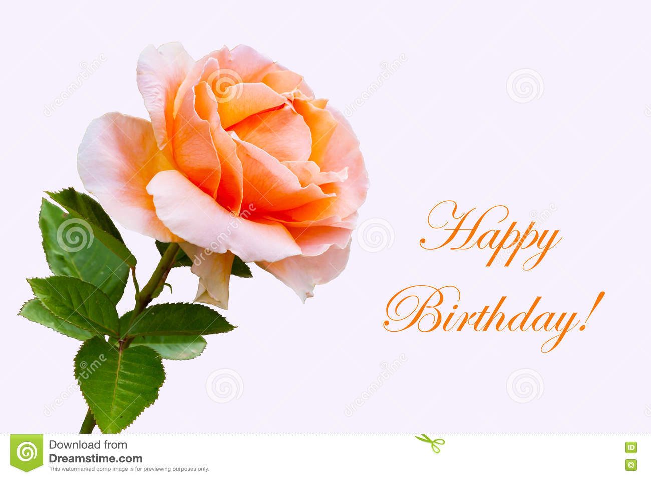 Close up beautiful rose flower happy birthday card stock image close up beautiful rose flower happy birthday card izmirmasajfo