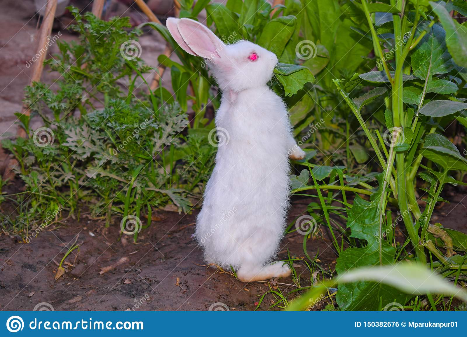 Close up of beautiful white rabbit in a garden