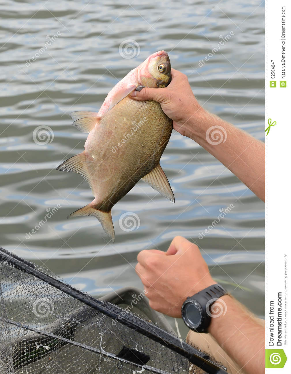 Close up of a big fish royalty free stock photography for Catching big fish