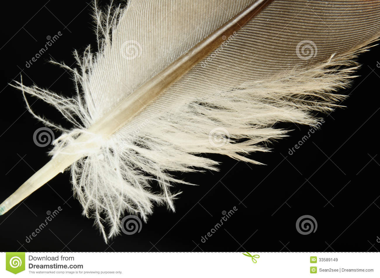 Close-up Bird Feather Royalty Free Stock Images - Image ...