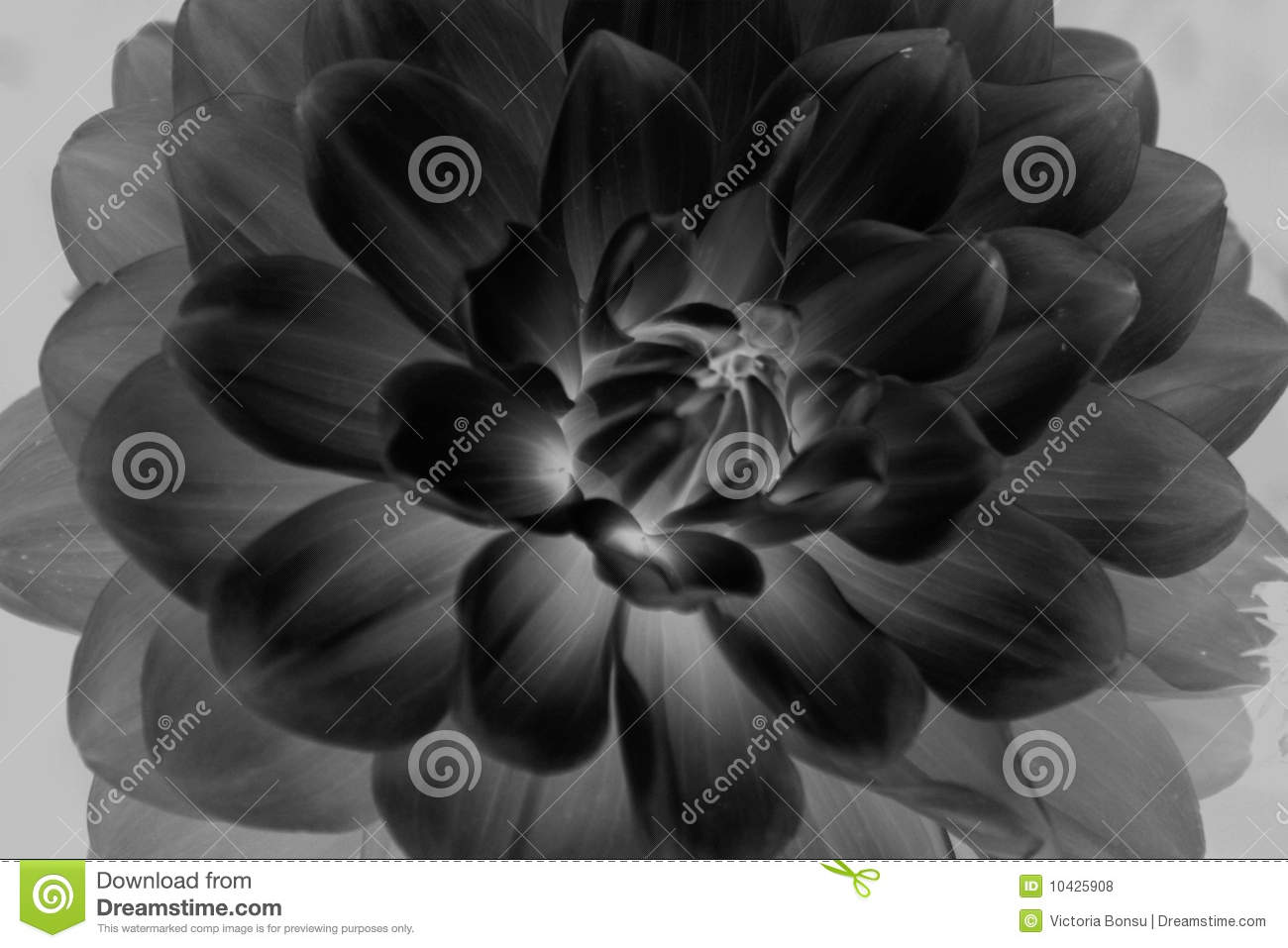 Close up of black and white flower