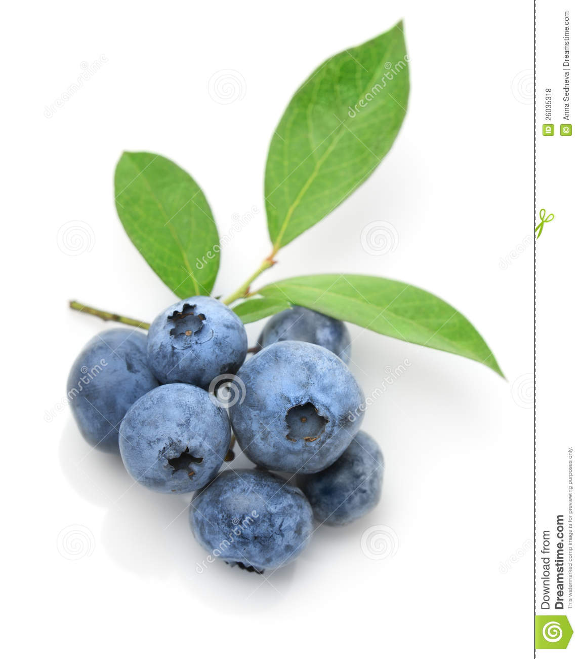 Close Up Of A Blueberry Twig Royalty Free Stock Photos ...