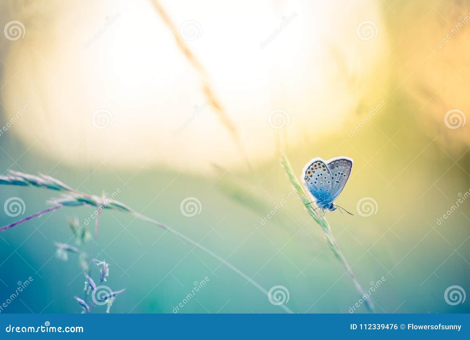 Close-up bonito da natureza, flores do verão e borboleta sob a luz solar Fundo calmo da natureza