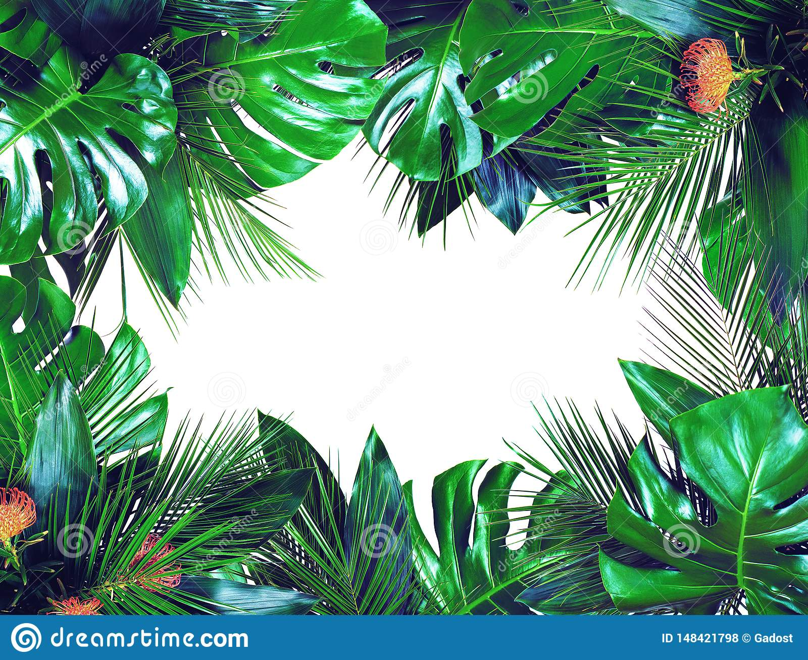 Close up of bouquets of various dark green fresh tropical leaves on white background