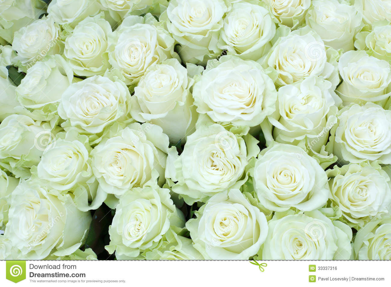 Close-up Of Bright Bunch Of Freshly Cut Big White Roses ...