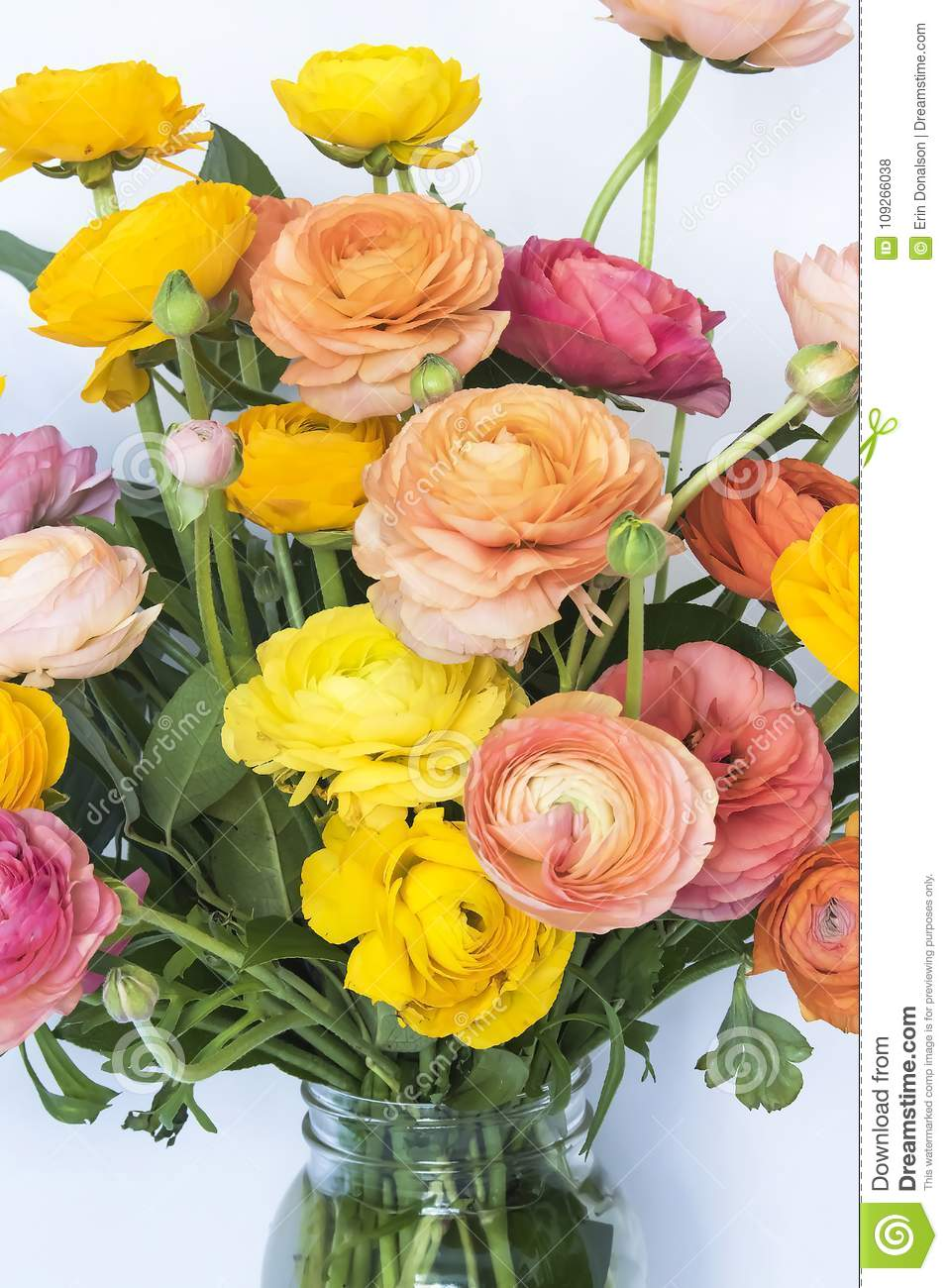 Close Up Bright Spring Colored Ranunculus Flower Bouquet Stock Photo ...