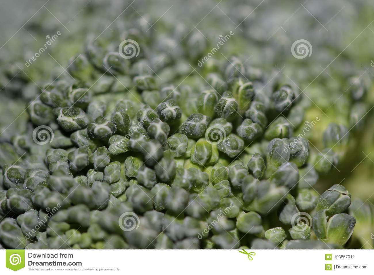 Close Up Of A Broccoli Floret Stock Photo - Image of broccoli