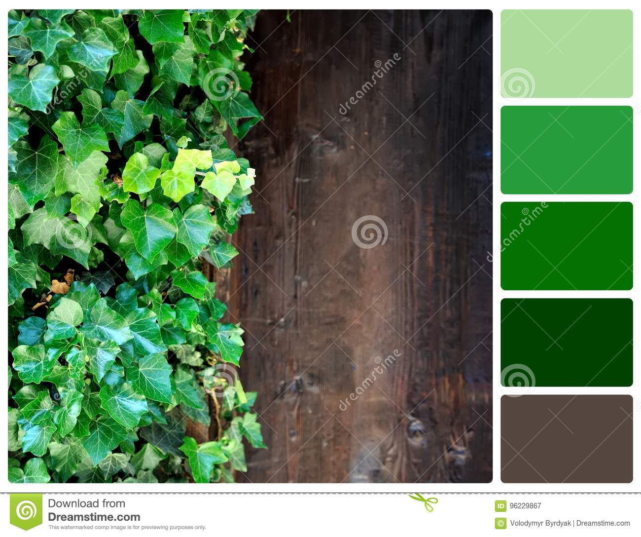 Close Up Brown Wood Wall With Green Leaves With Palette Color Sw ...