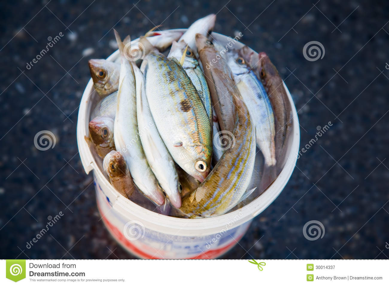 Bucket of fish royalty free stock photography image for Bucket of fish
