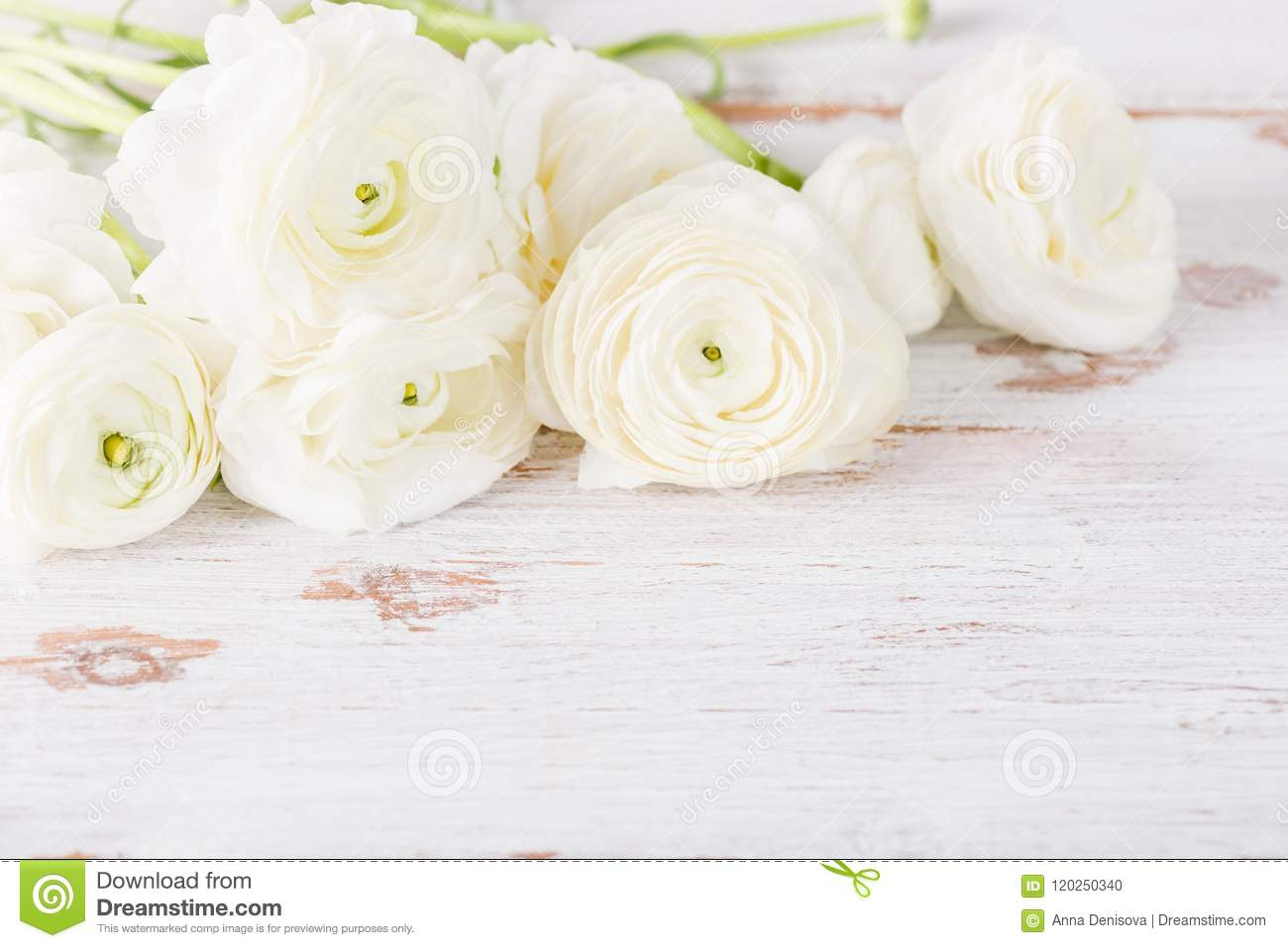 Bouquet Of White Ranunculus Buttercup Flowers Stock Photo Image Of