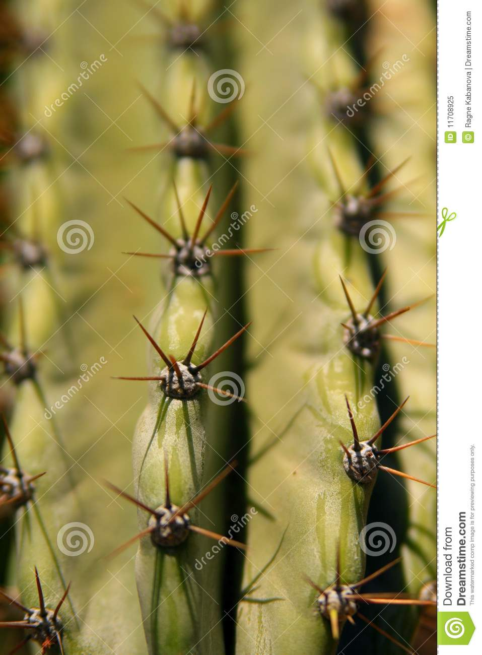 Download Close up on a cactus stock image. Image of edge, barren - 11708925