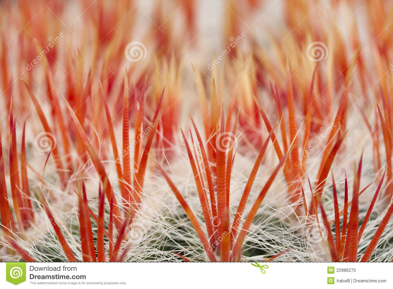Close up of an cactus