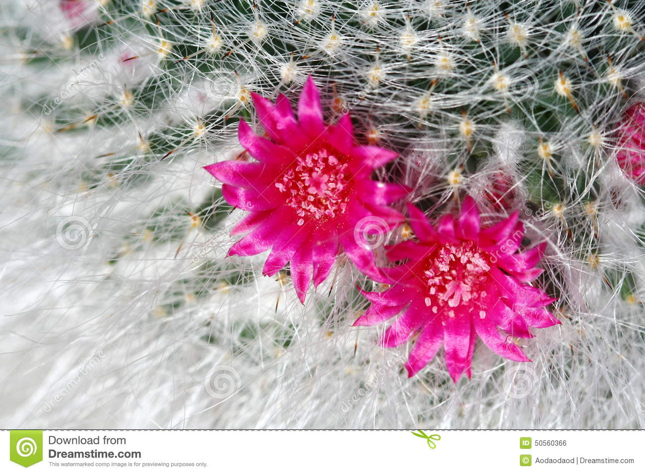 Close Up Cactus With Pink Flower Stock Photo Image Of Cacti Green
